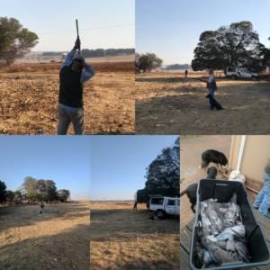pigeon hunting SA